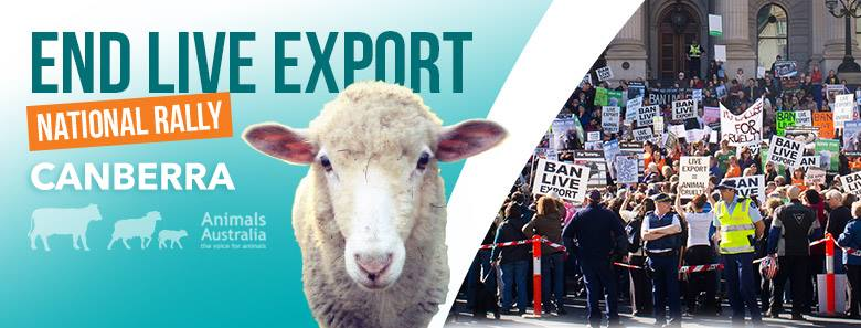 Live Export Rally 2015 Banner picture