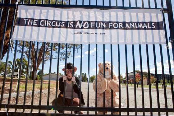 Circuses are no fun for animals